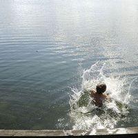 Badklådan trivs i det varma vattnet