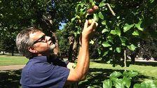 Tord Näslund vid ett äppelträd.