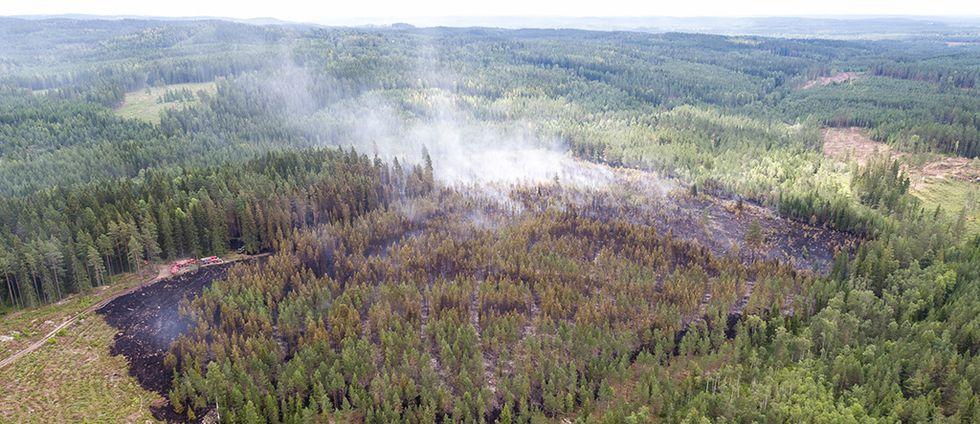 Ett stort område skog är nedbränt.