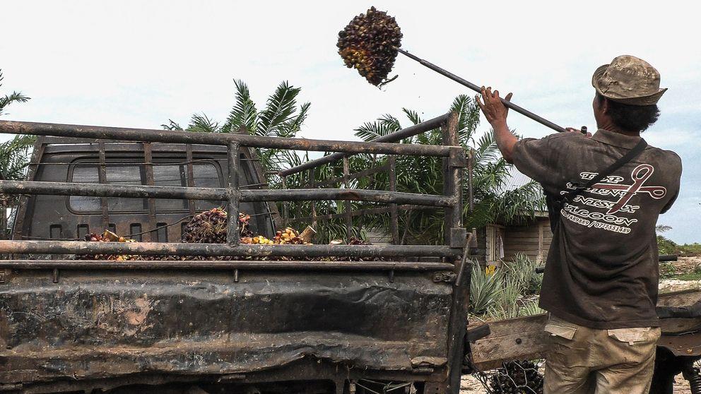 Arbetare på en palmplantage.