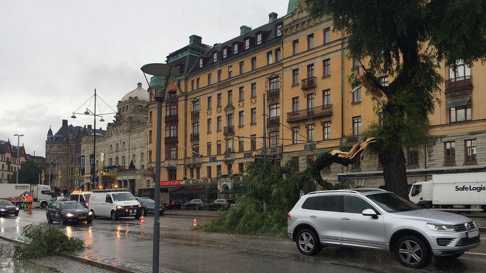 Del av träd ligger över Strandvägen.