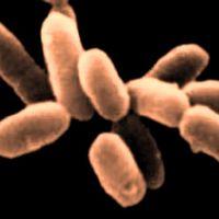 En bild på den numera utdöda mikroben Methanosarcina.