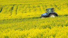 Traktor på rapsfält