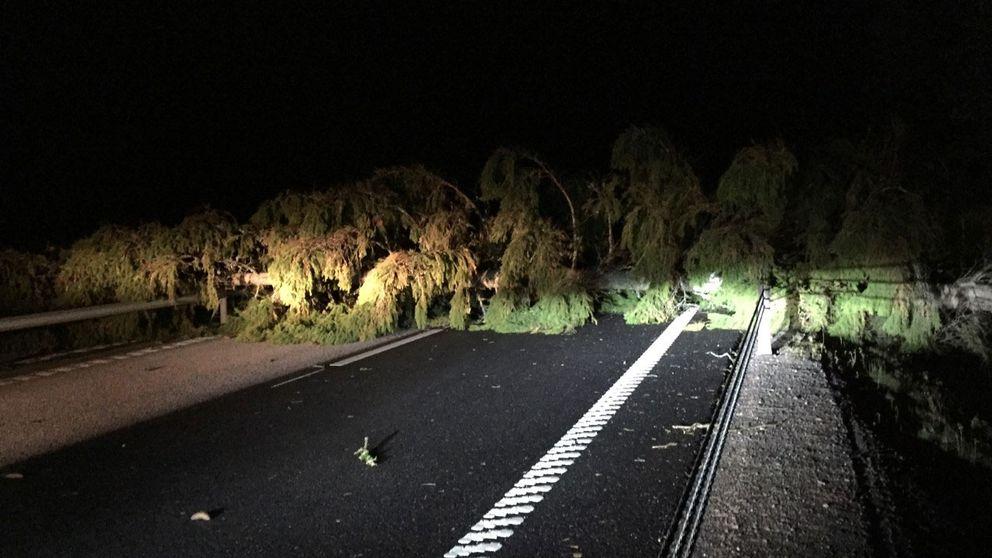 Nedblåst träd på E18 orsakade trafikkaos SVT Nyheter