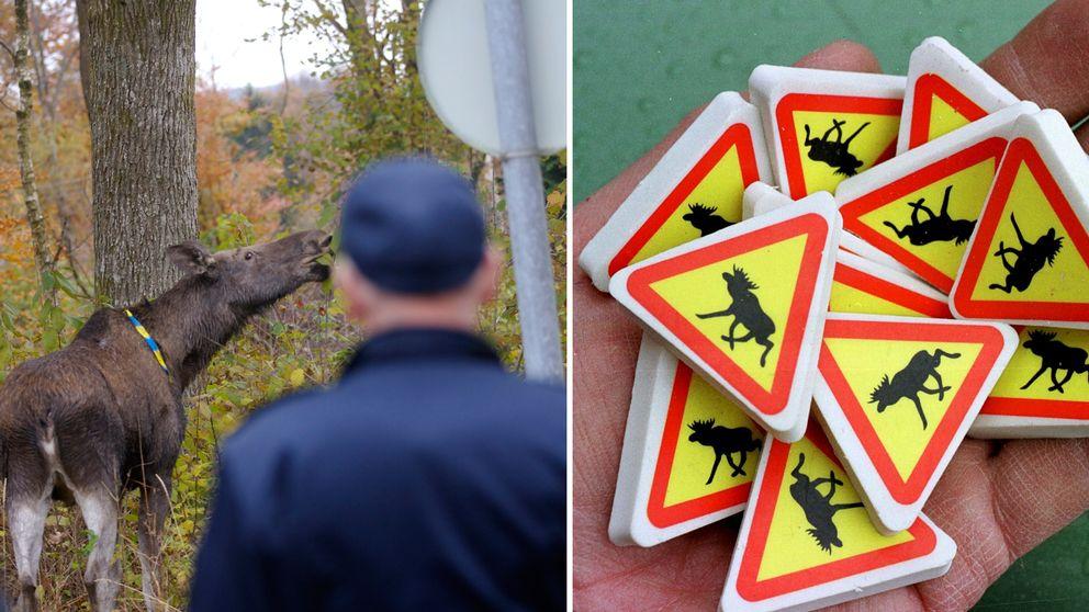 En älg och små varningsskyltar.