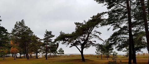 """Ett område med regn rör sig mycket långsamt norrut över Götaland och Svealand. I norra Värmland och västra Dalarna fortsatt lite snö eller blötsnö. Det blir också fortsatt ganska blåsigt i den södra halvan av landet. I större delen av Norrland mulet och lokalt lättare regn eller snö. Främst i västra fjällen en och annan solglimt, men även där ganska blåsigt. Skriven lördag kl 13.15 av Nitzan Cohen, 43142 Gäller till karta """"Söndag kl. 14"""" Söndagens meteorolog är Helen Tronstad, jobbmobil 48476, privat 070-769 27 53"""