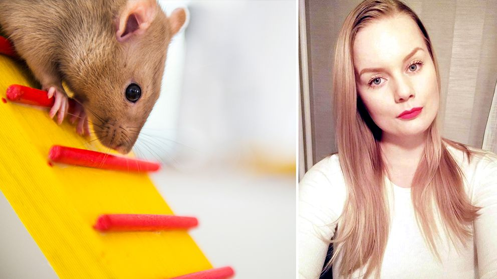 Råtta Tamråtta My Lindström