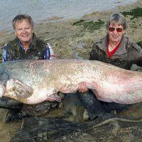 Michael Stjärnestrand med rekordmalen som vägde 90 kilo.