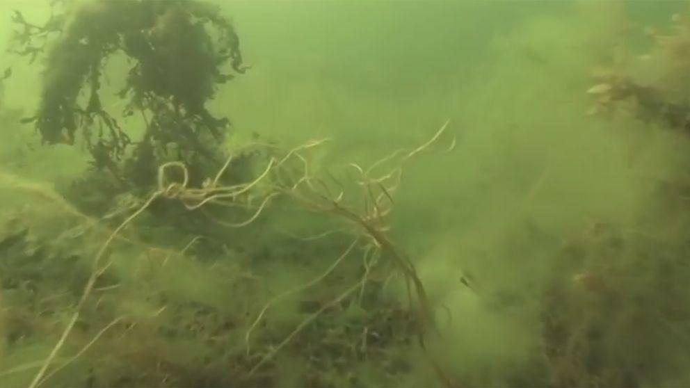 Östersjön, sjögräs, vatten, havsbotten