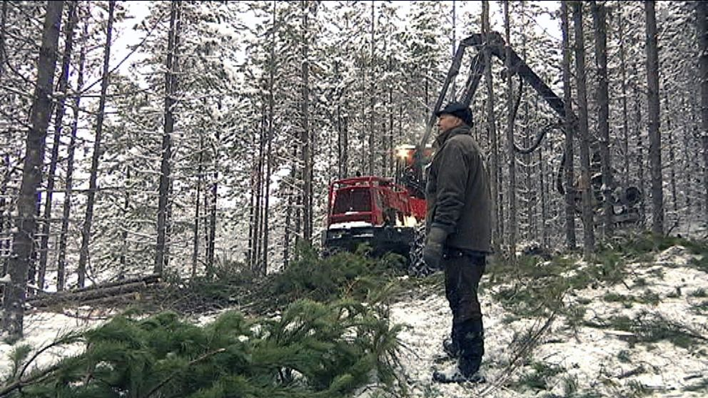Skogsägare vill ha kalhyggesförbud