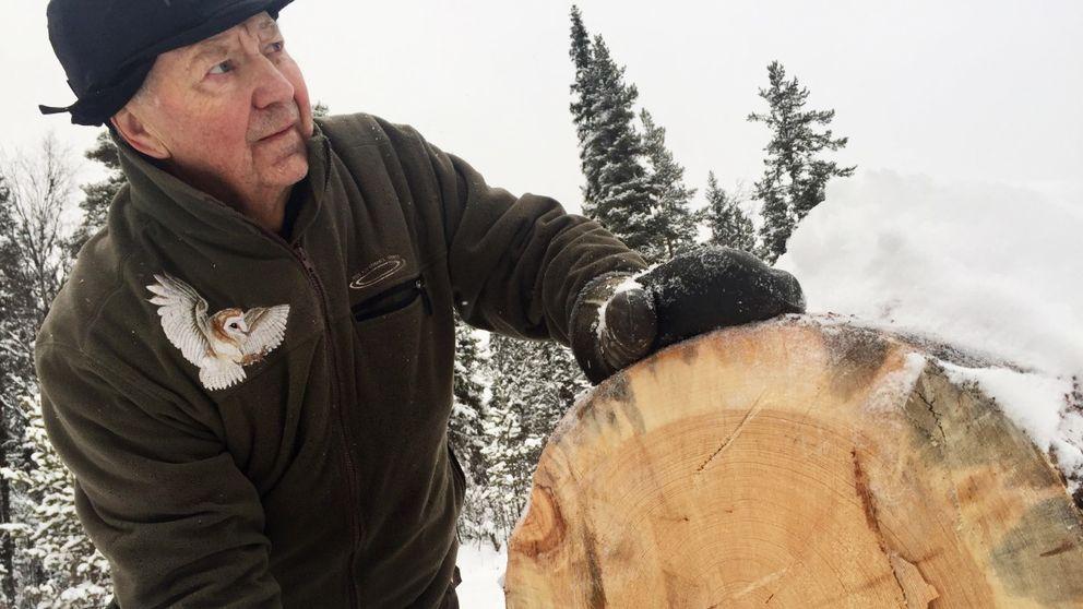skog, snö, träd, avverkning