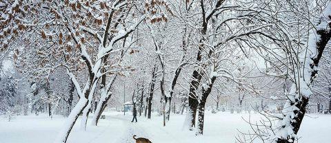 Hundpromenad i snöfall i Bulgariens huvudstad Sofia under tisdagen 29 november
