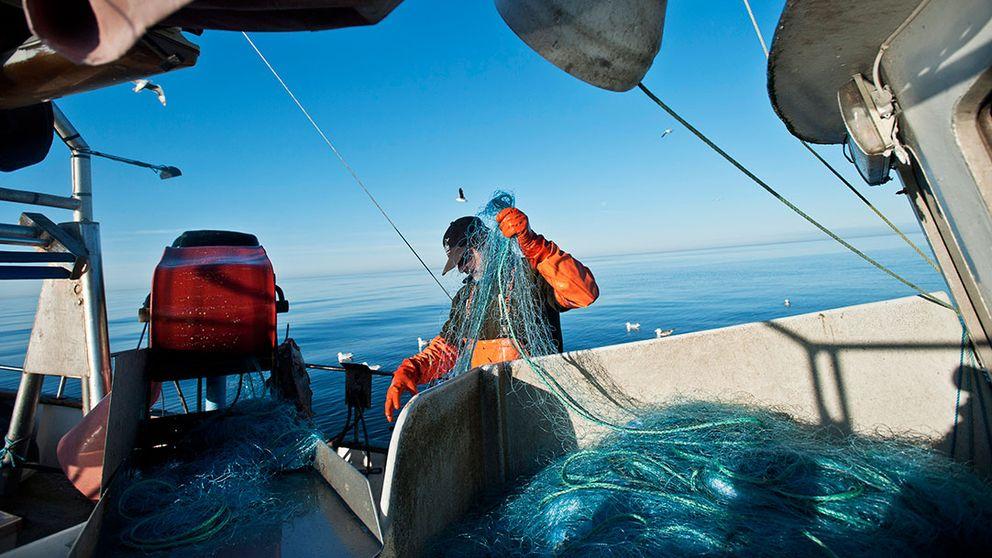 Fiskare vittjar nät.