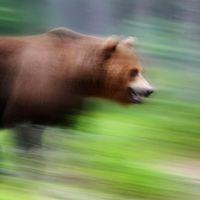 En björn gick till attack mot en jägare utanför Harg i lördags.