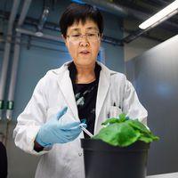 Professor Li-Hua Zhu