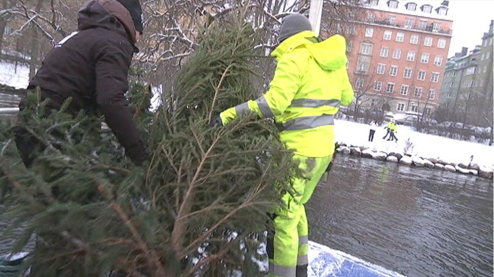 Världsunik maskin tar sig an julgranarna
