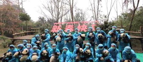 Gruppbild med pandaungar i Chengdu, Kina.
