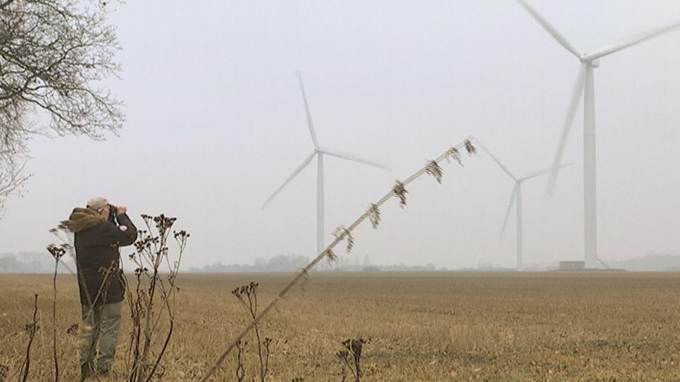Ornitologer varnade tidigt för risken att rovfåglar skulle kollidera med vindkraftverken.