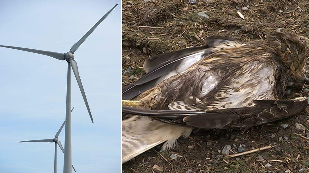 Elva döda rovfåglar har hittats.