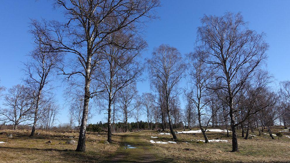 Lika snabbt som det blev vinter blev det vår igen. Lindsdal, Kalmar. 12 mars
