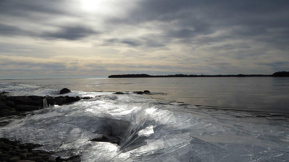"""Nattgammal vårvinteris som med lugna dyningar  vällt in över Vätterns strand i Hanken, Karlsborg. Ljudet av isen och synen av en långsam flod av """"fönsterglas """"var en fantastisk upplevelse! Vättern Karlsborg 170312"""