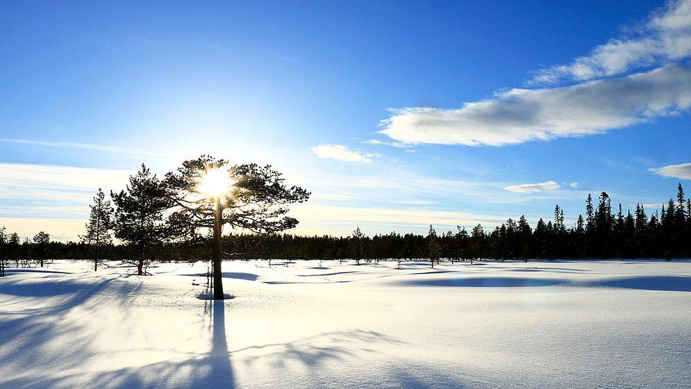 Snön ligger djup på myrarna i norra Tornedalen. Den värmande solen ger hopp om våren.