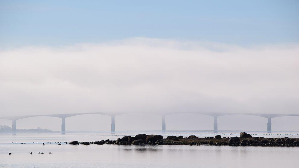 En vacker morgon på Värsnäs i Kalmar. Ett underbart vårtecken att se och höra glädjen hos fåglarna.