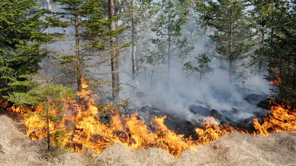 Gengrebild på gräsbrand. Gräs, hö, skog och brand syns på bild.