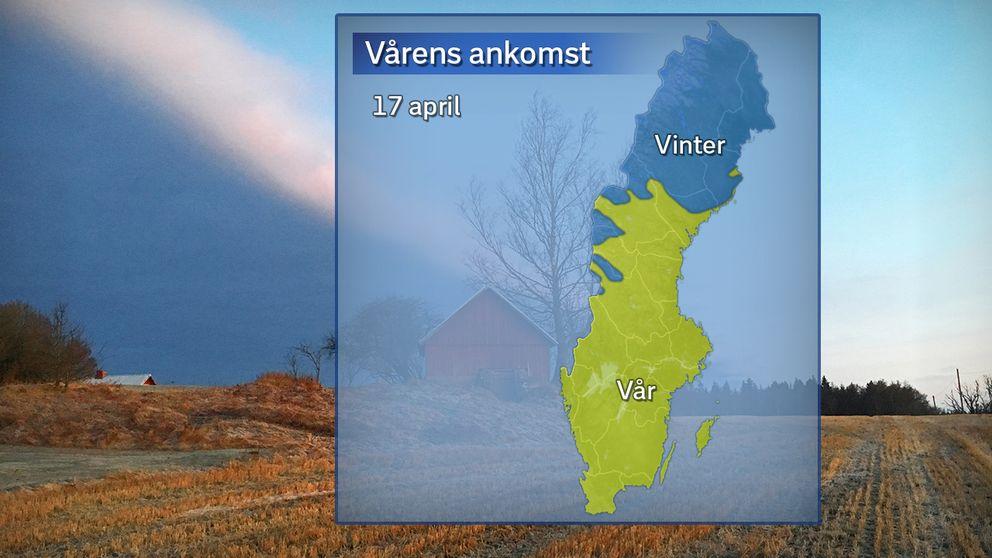 Vårens ankomst, där gult betyder att våren anlänt (sju dygn på raken med dygnsmedeltemperatur över 0 grader), och blått betyder att det fortsatt råder meteorologisk vinter (dygnsmedeltemperatur under 0 grader).
