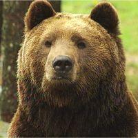 En kvinna och en björn