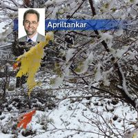 Snöklädda påskfjädrar i Valdemarsvik i östra Östergötland på långfredagen den 14 april.