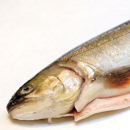 en urtagen fisk