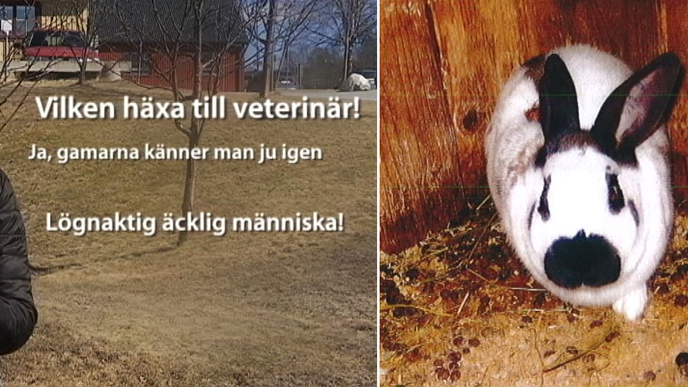 graik med elaka kommentarer, en bild på en kanin