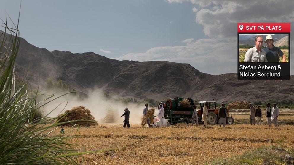 Opiumodling i Afghanistan