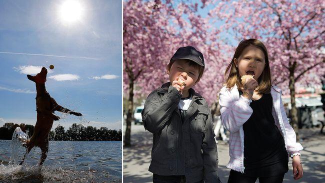 varm ledsagare boll suger i Stockholm