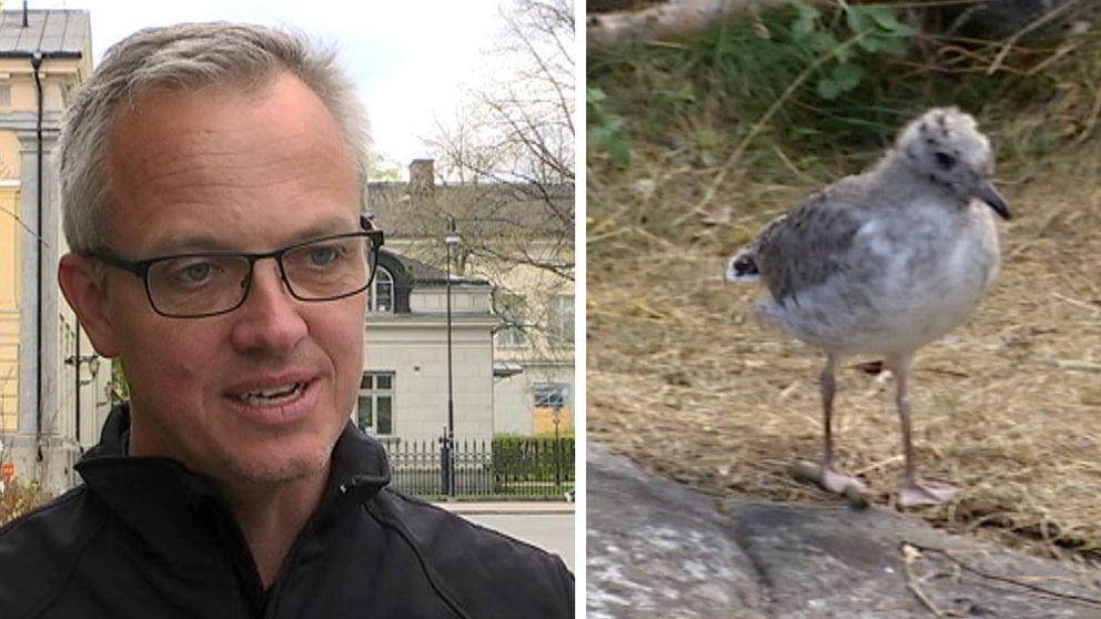 Jens Mattson från Länsstyrelsen förklarar varför man ska lämna djurungar ifred.