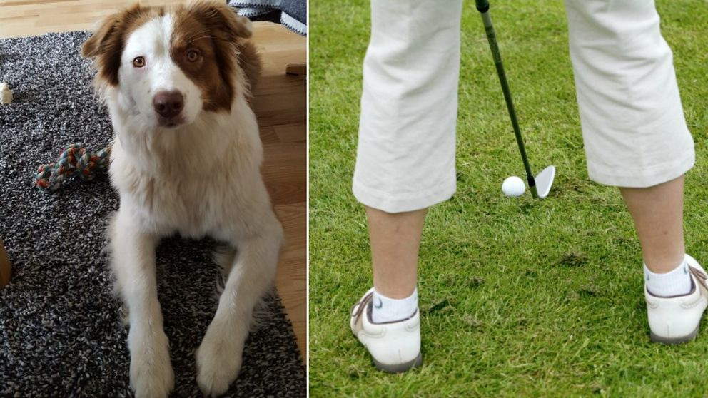 hunden sally, golf