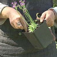 Trädgårdstips