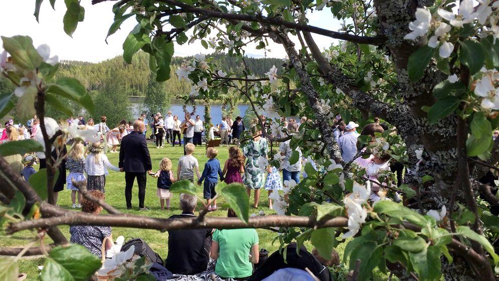 vuxna och barn i ring runt midsommarstång, sedda genom blommande äppelgrenar