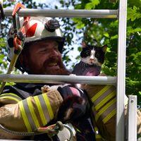 Här hjälper Emil Ström katten Molly ner från trädet.