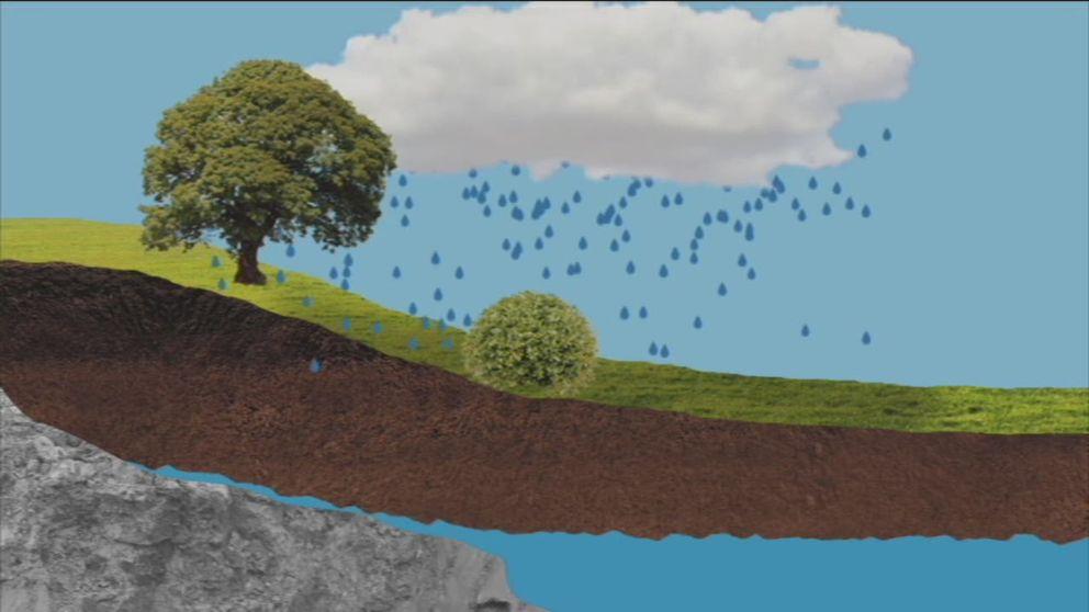Grundvattengrafik: Mycket sommarregn behövs. Mycket av regnet som faller på sommaren avdunstar eller sugs upp av växterna, så det behövs stora mängder innan marken blivit helt mättad så att vatten även kan nå ner till grundvattenmagasinen.