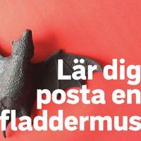 """Bild på en fladdermus och texten """"lär dig att posta en fladdermus""""."""