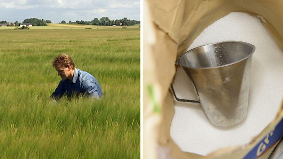 Allt fler odlare väljer bort sockerbetan.