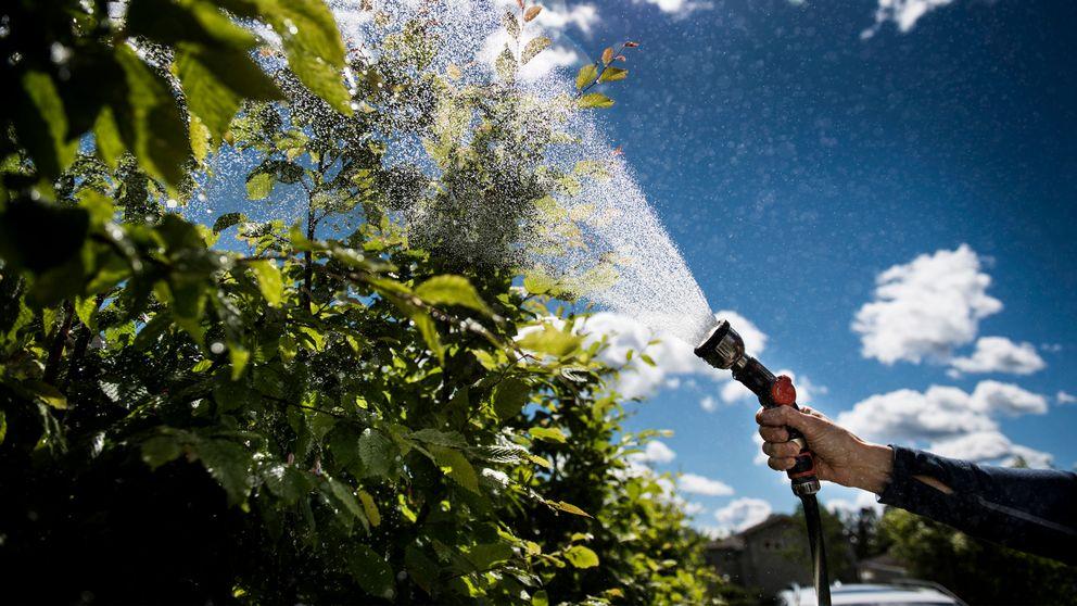 Tomtägare vattnar sin trädgård med vattenslang.