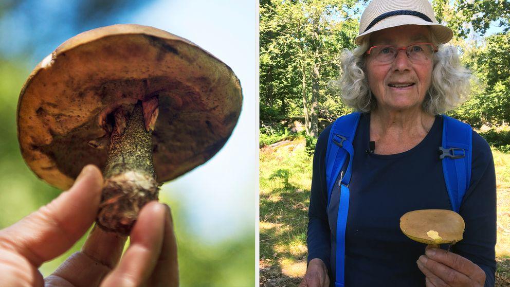 Ingrid Grahn-Nilsson är nöjd med svampsäsongen.