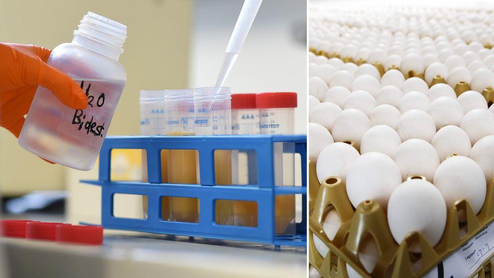 Allt fler kontaminerade ägg hittas runt om i Europa.