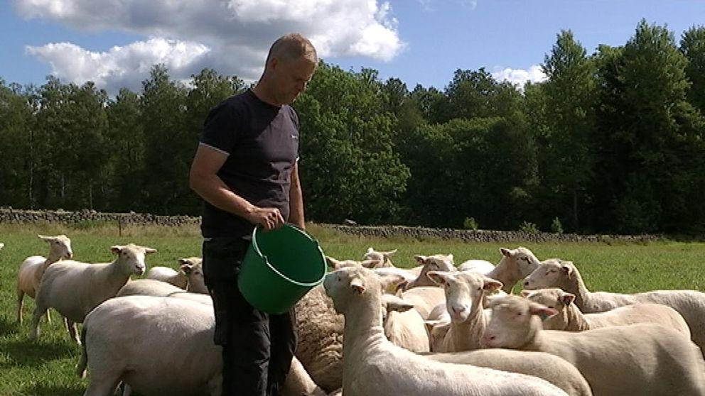 lamm, får, lantbrukare, hage, vall, bete