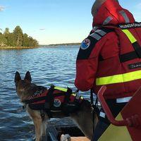 Sjöräddningshund står vid fören på en sjöräddningsbåt med sin förare beredd att jobba