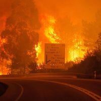 Många döda i våldsamma skogsbränder i Portugal