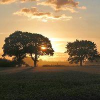 Vacker bild från Gantofta i Skåne